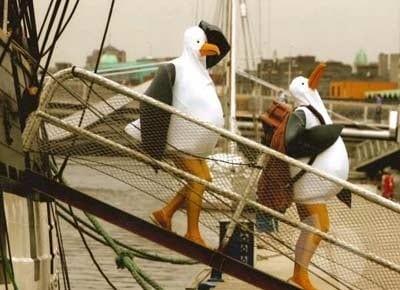 the-seagulls Image